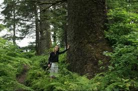 Sooke rainforest