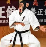 Chimp karate2